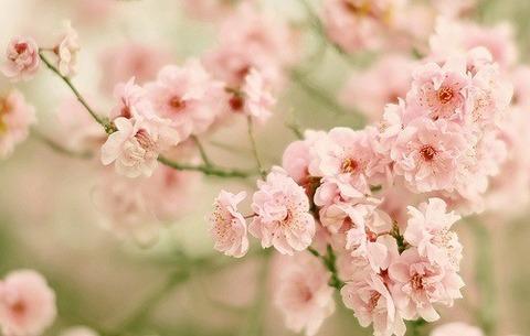 桜小ぶり2014330