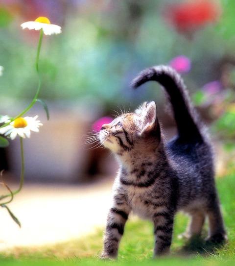 春の花を見上げる子猫