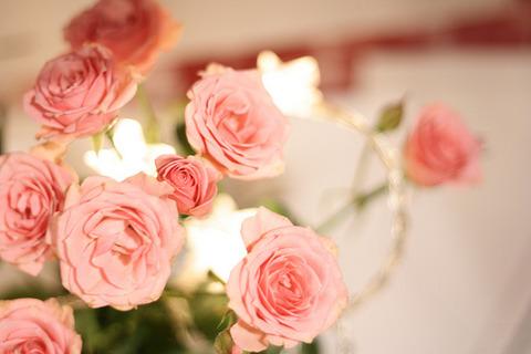 サーモンピンクの小バラと背景にライト