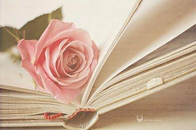 本の間にピンクのバラ20140620