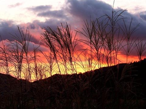 ススキ野原の夕焼け20140923