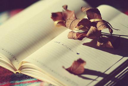 枯葉が何枚かノートの上