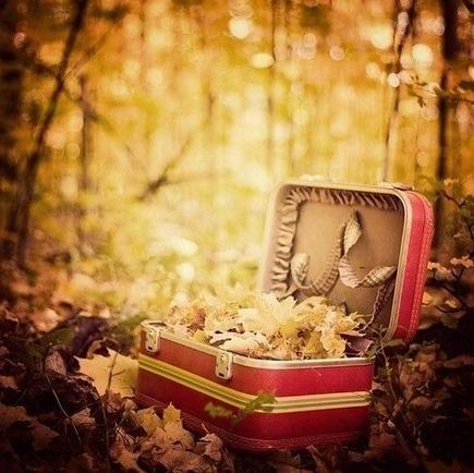 枯葉が詰まったトランクが山中に