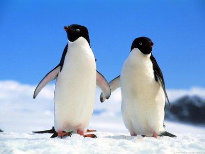 手をつなぐペンギン2羽