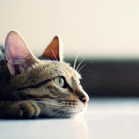 ジュリーそっくりな猫右向き20140731