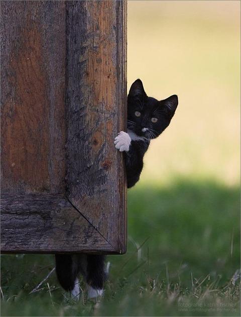 猫みしり20140924