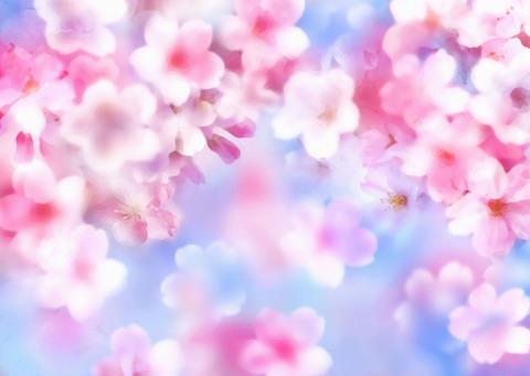 桜イラスト背景青