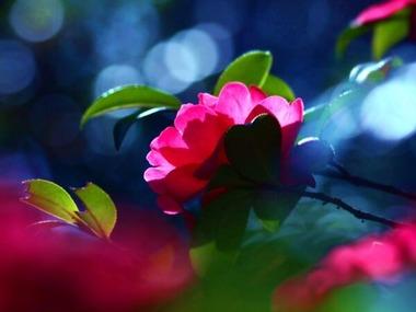 Kichan ブルーの淡い光にピンクの花 20140716