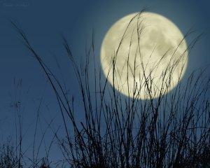 満月と薄20140909
