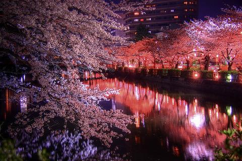 桜・夜の川のほとり