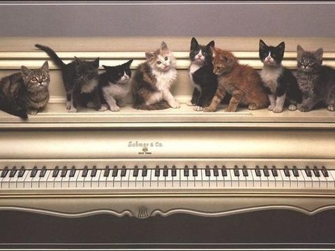 ピアノの上に8匹の猫