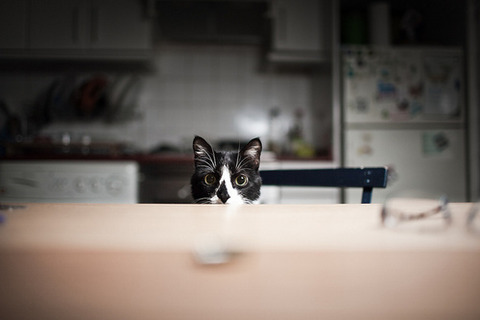 猫白黒テーブルの向こうに顔半分20140923