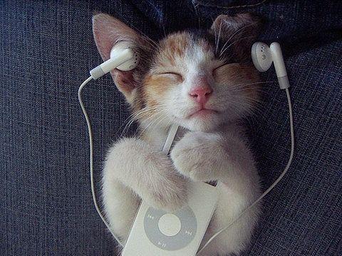 イヤホーンのチャトラン猫