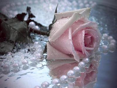 雨に濡れたピンクのバラと真珠