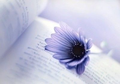 ブルーに近いバイオレットの花が広げた本の上に。女子向きお洒落画像