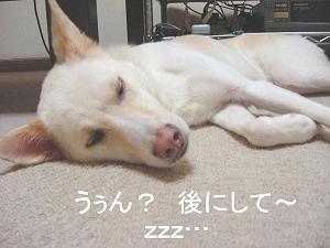 tonic_めちゃねむ