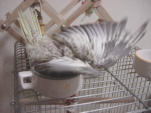 poppie_お風呂