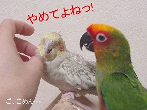 poppie_握手2