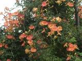浦戸の花2