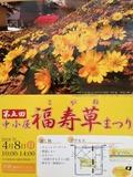 福寿草まつりポスター