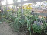 26駅前花壇�