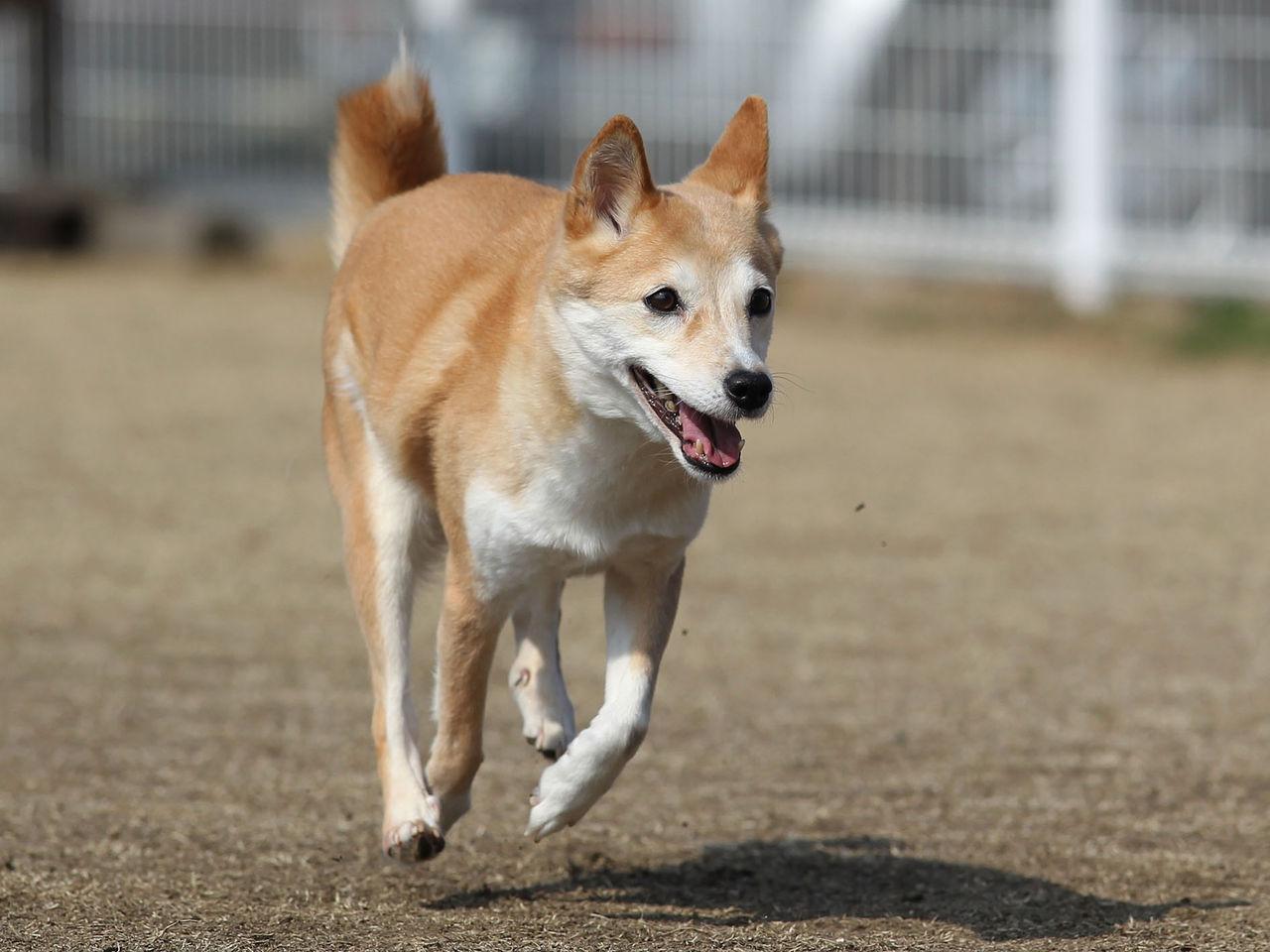 わんわんアイランド淡路島                  飛行犬