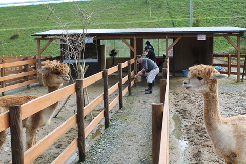 牧場の柵を塗りました !