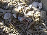 石・珊瑚と貝殻