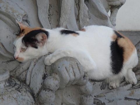 世界の猫スポット―タイ・バンコク/ワット・アルン