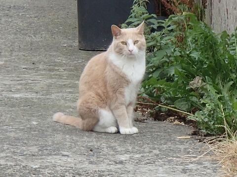 北アイルランドの西ベルファストで出会った猫
