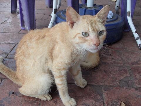 世界の猫スポット―フィリピン・マニラ/リサール公園①