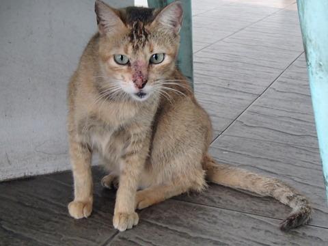 フィリピンの首都マニラで出会った猫たち