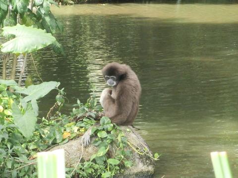 シンガポールの観光立国政策と経済成長を支える動物園