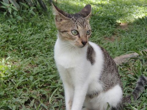 世界の猫スポット―フィリピン・マニラ/リサール公園②