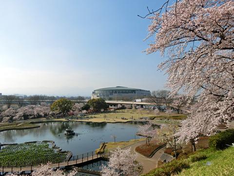 桜満開の前橋公園でお花見したら、群馬県庁にも立ち寄ろう!!