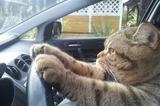 ドライブネコ