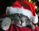 クリスマスネコ