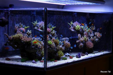 Reuven-Tal-Israel-Reef-1