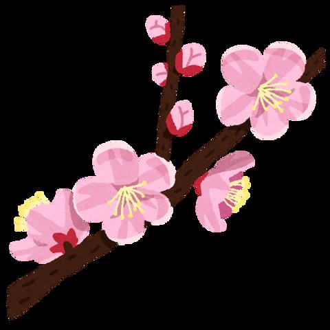 flower_anzu