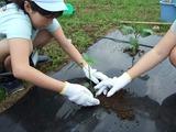 夏野菜の植え付け作業