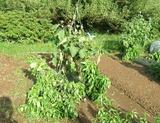 20130916 台風被害2