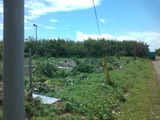 120620_0930台風被害3