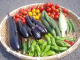 収穫した野菜7290057