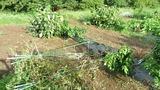 20130916 台風被害1