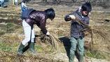 同じく藁敷き作業ですDVC00537