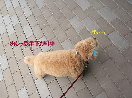 fudai2