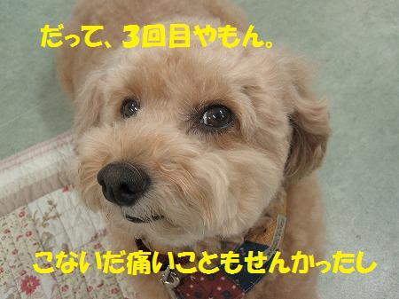 fudai6
