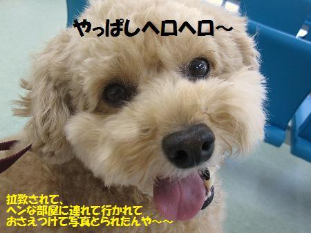 fudai10