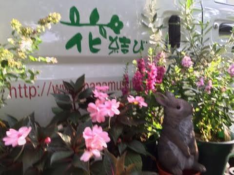 花結び-1