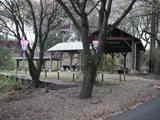 葉桜でした